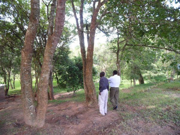 Im botanischen Garten von Mzuzu:
