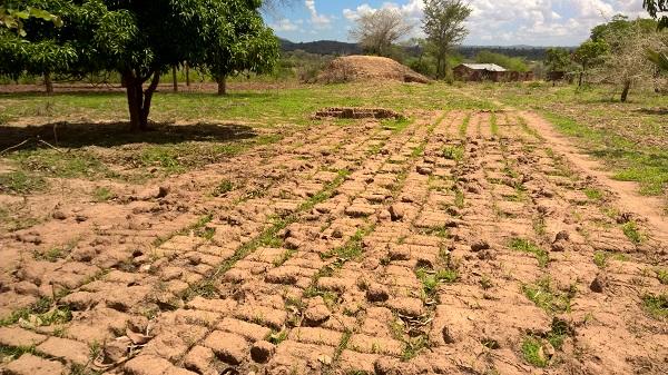 Im Hintergund ein Termitenbau, im Vordergrund zum Trocknen ausgelegte Ziegelrohlinge, die durch Regen unbrauchbar wurden.