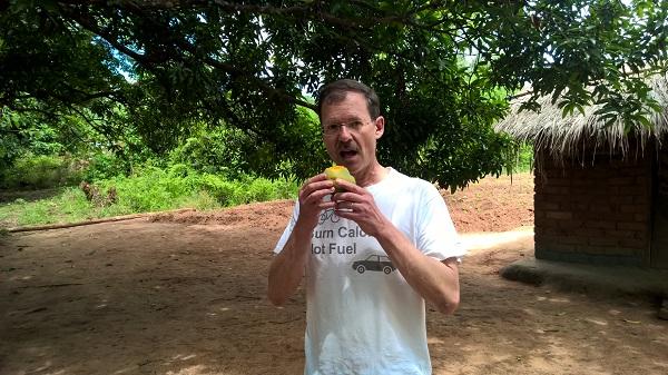 Frische Mangos vom Baum zum Reinbeißen