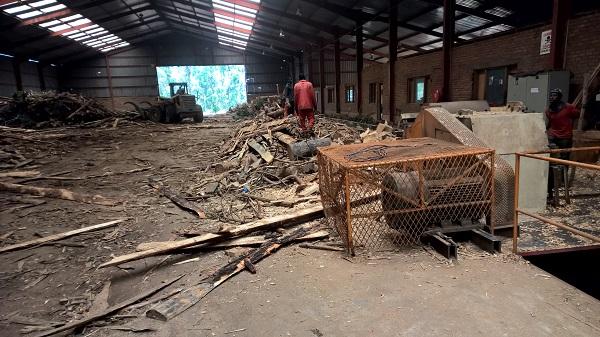 Sämtliche Produktionsabfälle und dünne Stamme aus den Plantagen werden hier für die Plattenproduktion gehackt und zerfasert.